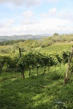 Casale della Ioria uses natural winemaking methods in the vineyard and the cantina