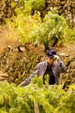 Working the Rosesse vineyards